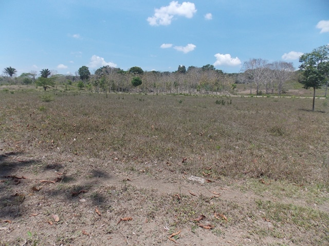 near Bullet Tree Village, Cayo, Belize
