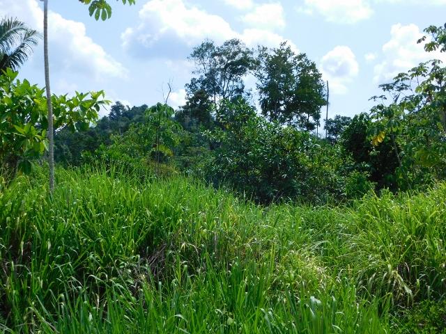 Agua Viva, Belmopan, Cayo District, Belize