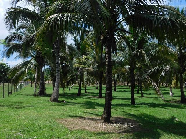 Teakettle Village, Cayo District, Belize.