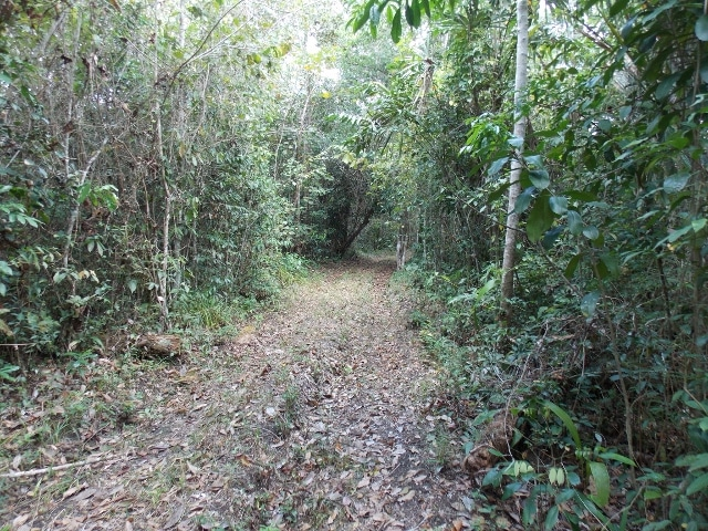near Spanish Lookout, Cayo District, Belize